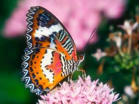 colorful butterfly colorful butterfly photos 7 high resolution wallpaper