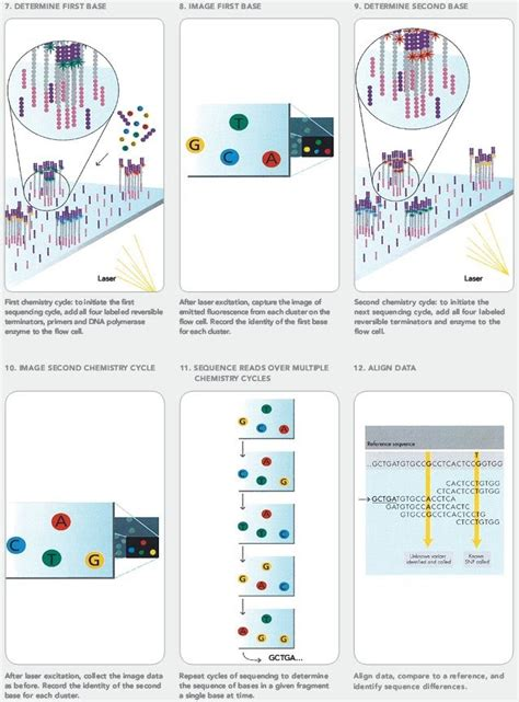 illumina sequencing workflow illumina sequencing overview evolutionary genetics