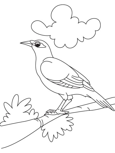 mynah bird coloring page cute myna bird coloring page birds pages litle pups
