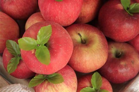 apple vietnam fruits of southern vietnam