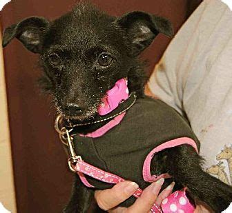 rescue dogs ri 145 best adoptable dogs images on island rhode island and baby cats