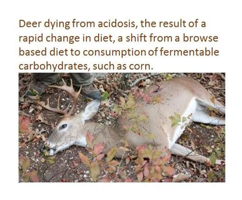 what can i feed the deer in my backyard what can i feed the deer in my backyard 28 images what can i feed deer in my