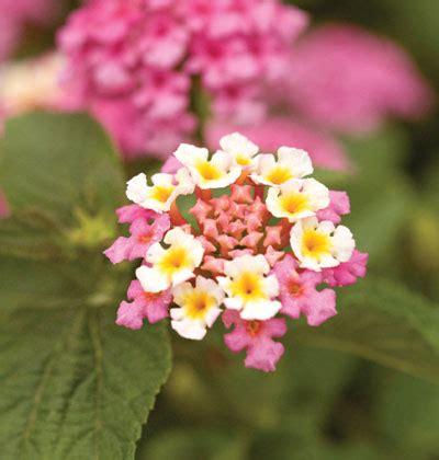 fiori sul terrazzo fiori sul balcone in estate quali scegliere e come