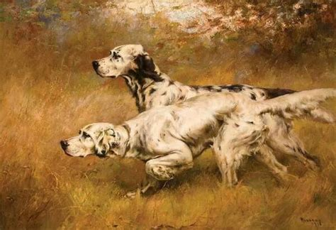 setter gun dog training 25 best ideas about english setters on pinterest