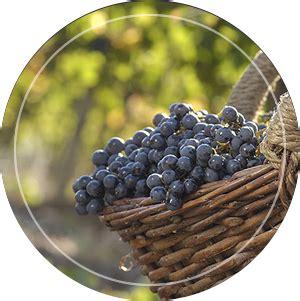 cadena productiva vitivinicola coviar