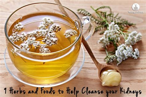 Kidney Detox Tea Side Effects by 9 Foods And Herbs To Help Cleanse Your Kidneys Health