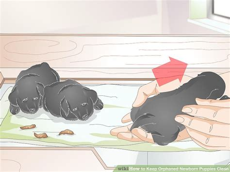 how to keep newborn puppies warm 3 ways to keep orphaned newborn puppies clean wikihow