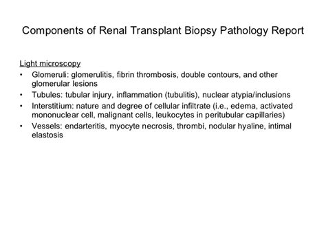 biopsy report sle algorithmic approach to the renal biopsy fellow