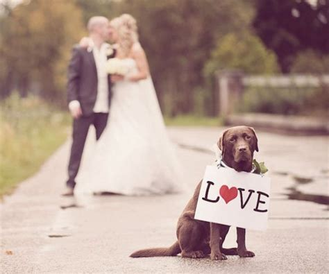 puppy wedding the best dogs in weddings dogvacay official