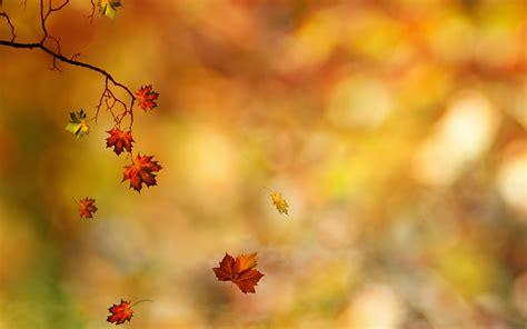 Autumn Leaves Falling #6922994