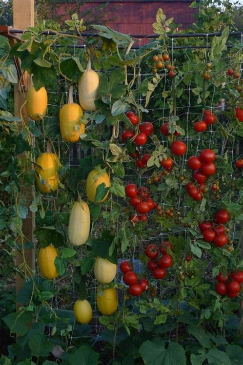 vertical fruit trees best 25 vegetable gardening ideas on