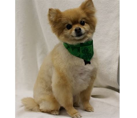 best in show grooming gallery best in show professional pet grooming