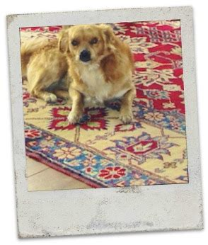 why do dogs rugs why dogs cats rugs fair square imports