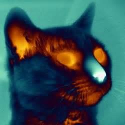 what is infrared light what is infrared light askipedia
