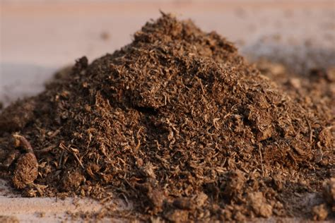 cactus lover peat moss use and benefit