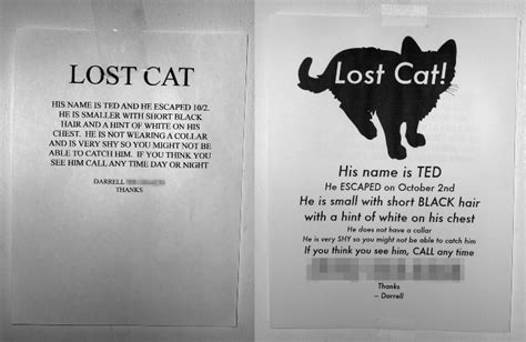 lost flyer lost cat flyer redesign matthew halm