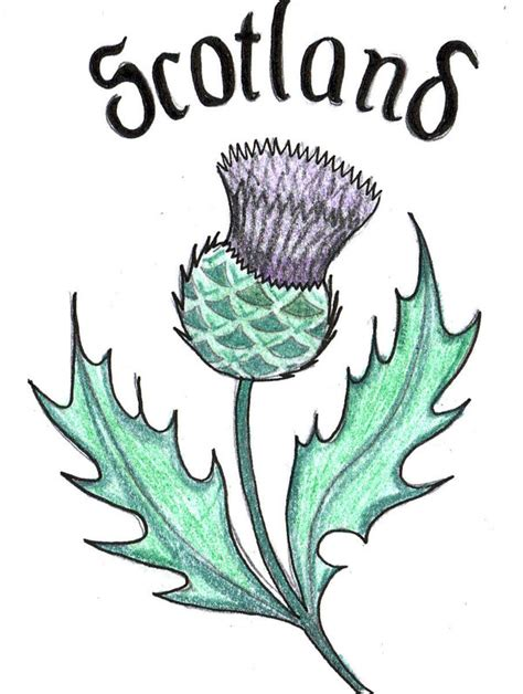 Scottish Designs Pin Scottish Thistle Design On Pinterest