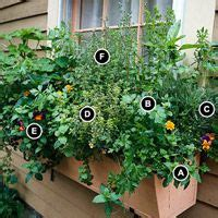 herbs in window boxes grow herbs out your window gardens sun and herbs garden