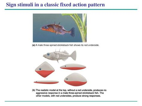 Fixed Action Pattern Definition Biology | ppt combined power point notes biology 111a lange