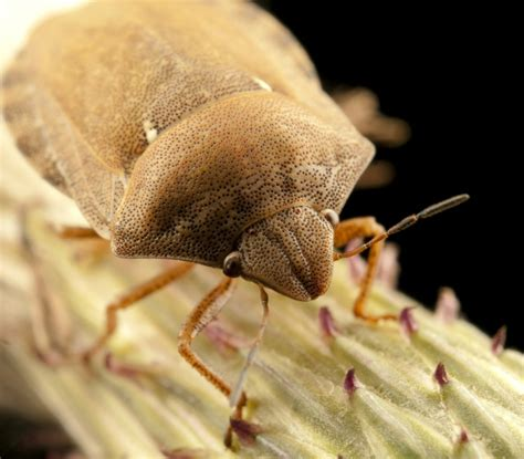 treating bed bugs should you consider treating bed bugs yourself