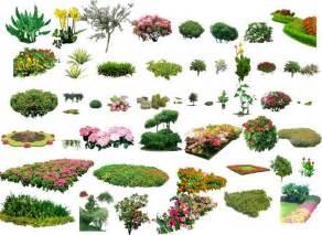 landscape plants shrubs collection architectural