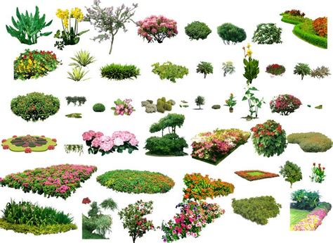pattern photoshop vegetation landscape plants shrubs collection architectural