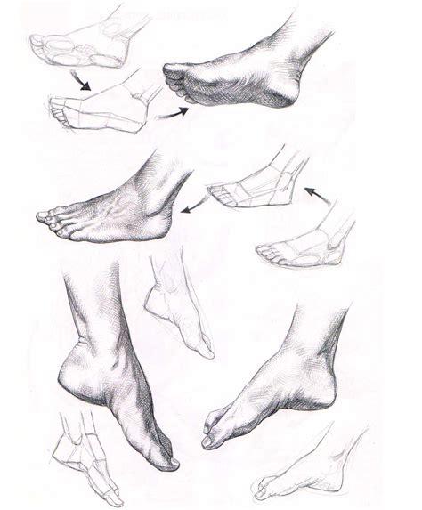 patterns of nature memoria press aprender a dibujar manos y pies el dibujante