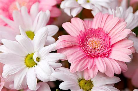 fiori annuali come potare piante e fiori di orto e giardino guida di base