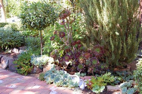 piante grasse in giardino giardini piante grasse piante grasse piante grasse da