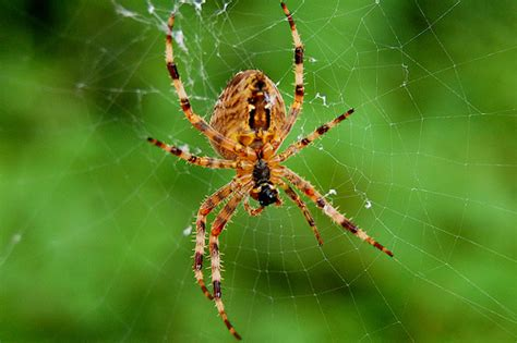 Garden Spider Is It Poisonous What Of Spider Is This Yahoo Answers