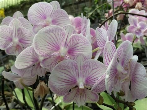color orchids new orchid flower colors orchid hub
