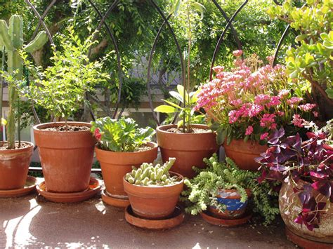 apartment container gardening san francisco bay area amarez feels like home