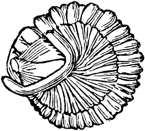 Free Coloring Pages Of Fossil Fossils Coloring Pages
