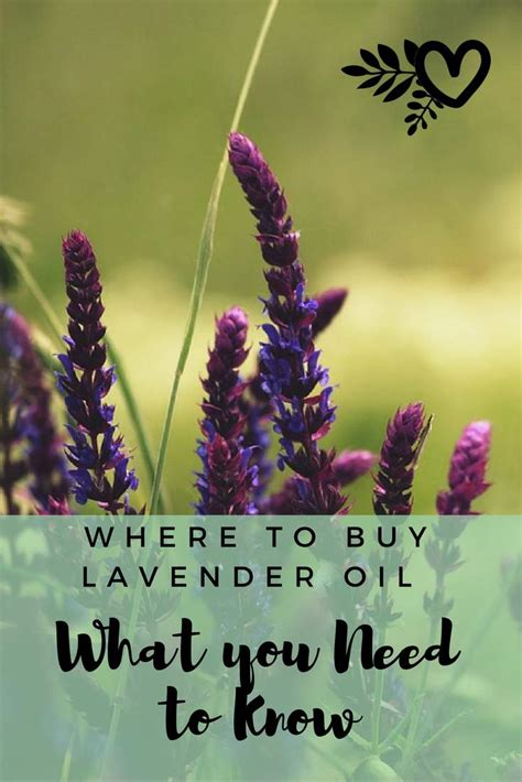 what i need to know to buy a house what to look for when buying lavender oil the best organic skin care