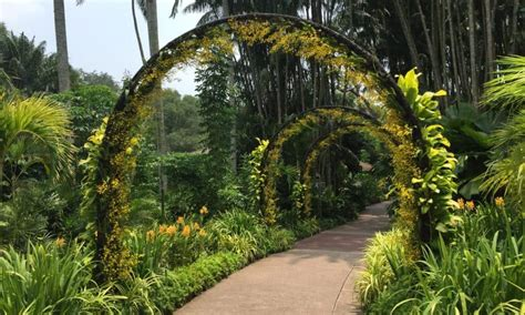 things to do in botanic gardens singapore 5 things to do in singapore with voyage