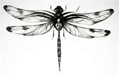 collection of 25 black dragonfly design