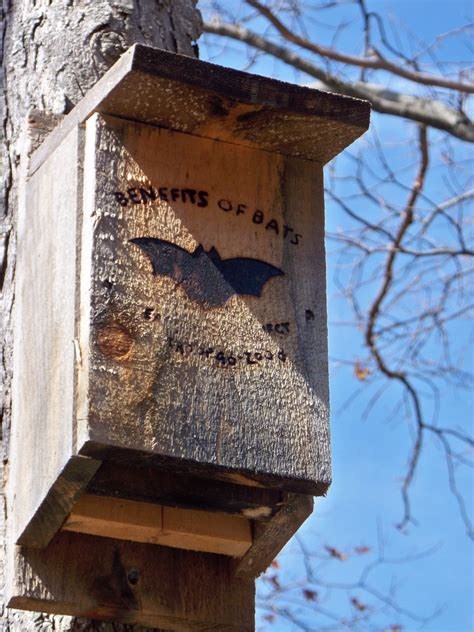 plans for a bat house bat house plans tips for building a bat house and attracting bats to your garden