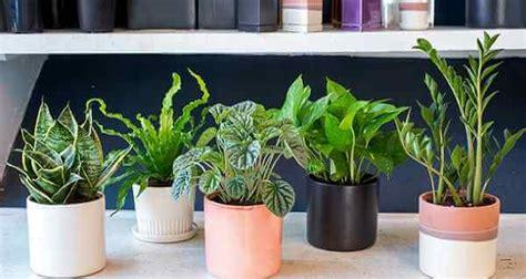 plants     bedroom    sleep