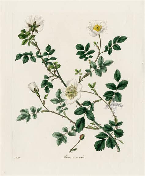 Botanic Botanical Botanical Nature As And Inspiration