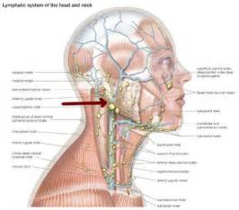 nodes in the neck