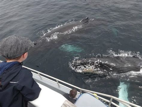 mullowney s boat tours mullowney s puffin and whale tours bay bulls canada
