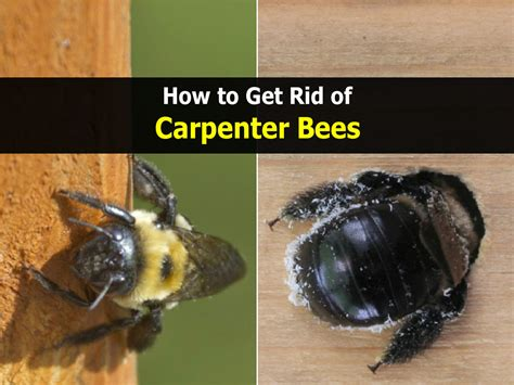 how to get rid of wasps in backyard how to get rid of a beehive in your backyard 28 images