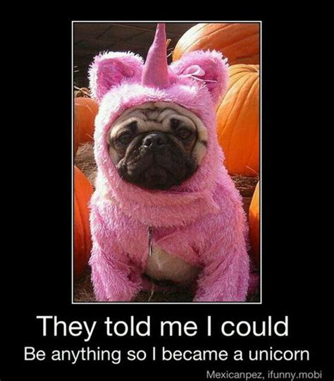 unicorn pug the world s catalog of ideas