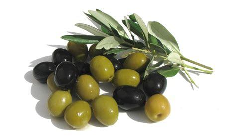Minyak Zaitun Yang Kecil 15 manfaat dan khasiat buah zaitun untuk kesehatan khasiat