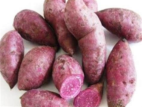 Batatas Keripik Pangsit Ubi Ungu purple sweet potato ipomoea batatas l lam research diagram