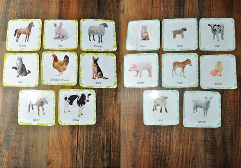 printable montessori flashcards 14 awesome farm animals and their babies printables images