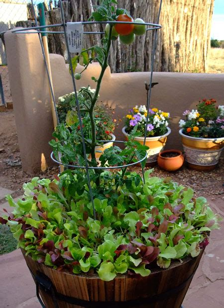 baby lettuce in a container 171 at home with garden grace - Lettuce Container Garden