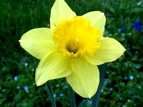 vanitoso significato narciso il significato di questo fiore ovvero autostima