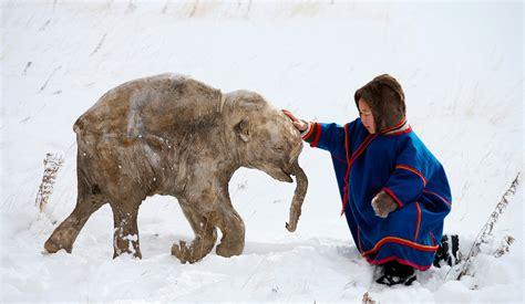 hutte en os de mammouth mammouth les animaux pr 233 historiques