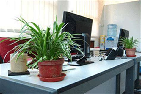 office plant decoration kl be more productive get some plants on your desk